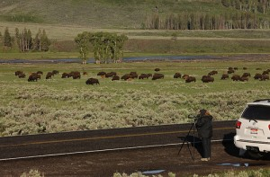 7437675216_213d5f916f Herd of Bison Yellowstone